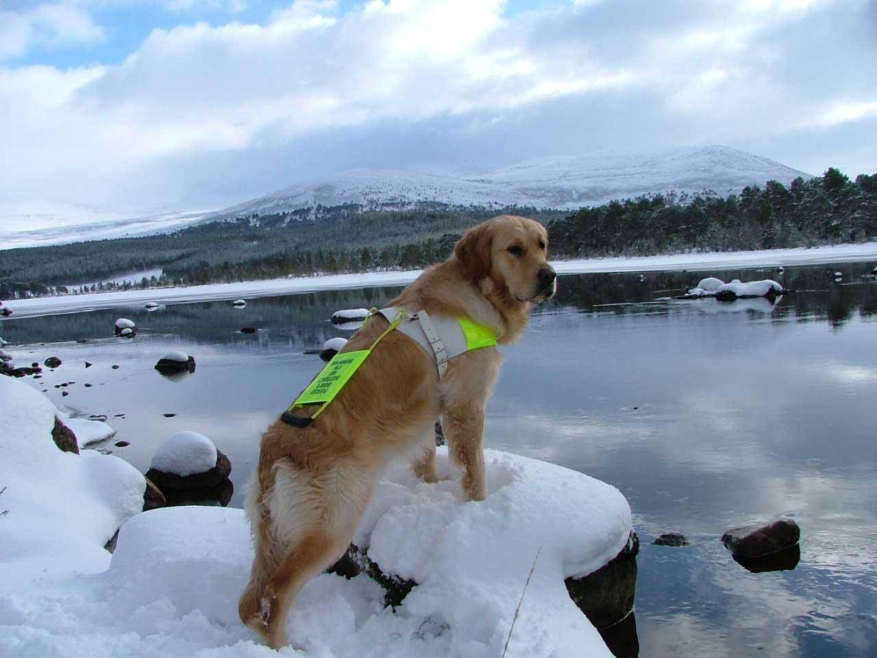 Walks With Dogs Scotland